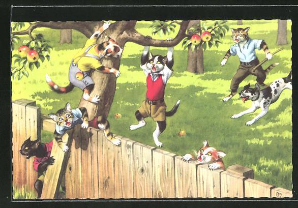 AK vermenschlichte Katzen stehlen Äpfel von Nachbars Garten
