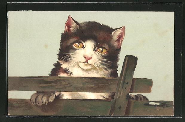 AK Katze blickt über einen Zaun