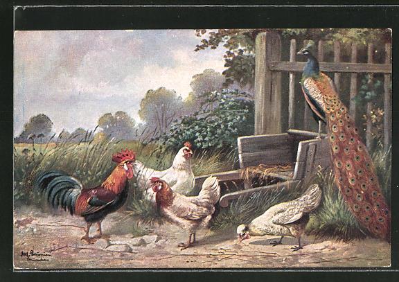 Künstler-AK Alfred Schönian: Pfau und Rassehühner an einem Gartenzaun