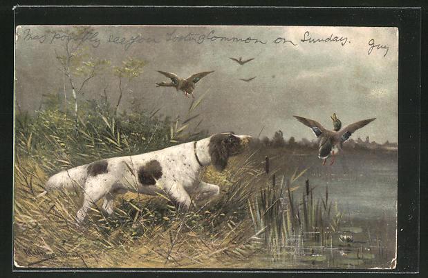 Künstler-AK M. Müller jun.: Vorsteher-Hund am See und aufgeschreckte Enten