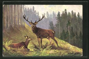 Künstler-AK M. Müller jun.: Kapitaler Hirsch und Hirschkuh im Wald
