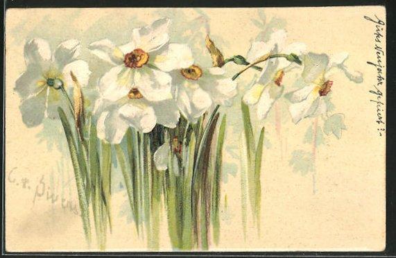 Präge-Künstler-AK Clara von Sivers: Narzissen, Blüten
