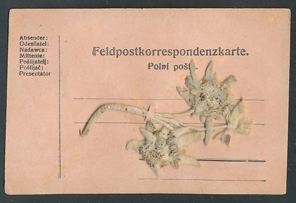 Trockenblumen-AK Feldpostkarte mit getrocknetem Edelweiss