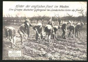 Riesen-AK Westfront, Deutsche Kriegsgefange verrichten Feldarbeit hinter der Front