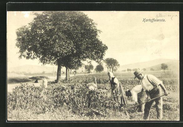 AK Bauern bei der Kartoffelernte