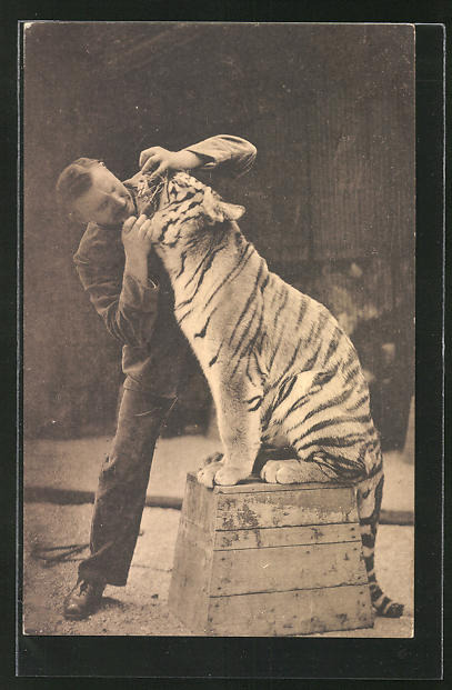 AK Dresden, Zoologischer Garten, Mann schaut dem Tiger ins Maul