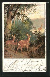 Duft-AK Rehe im Wald, Postkarte mit Waldeshauch