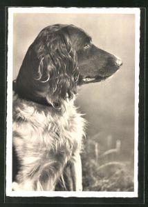 AK Hund mit wachem Blick, Seitenportrait