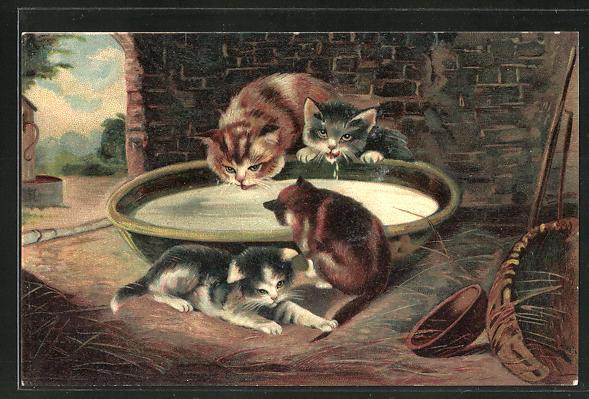 Lithographie Kätzchen trinken aus Schale