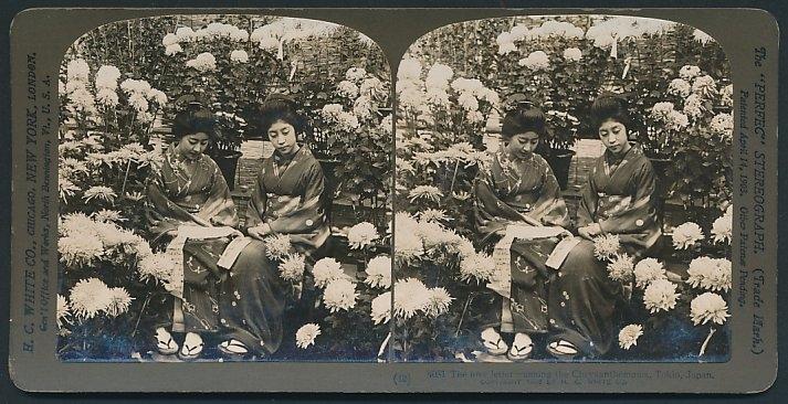 Stereo-Fotografie H.C. White, New York, Geisha's in einem Garten zwischen Blume in Tokio