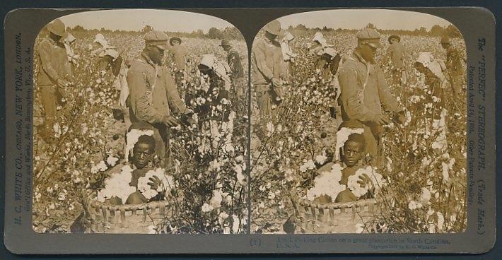 Stereo-Fotografie H.C. White, New York, afroamerikanische Baumwollpflücker auf einer Plantage in North Carolina