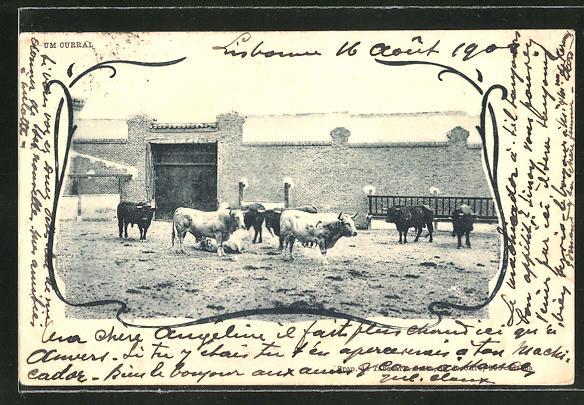 AK Kühe mit kurzen Beinen am Stall