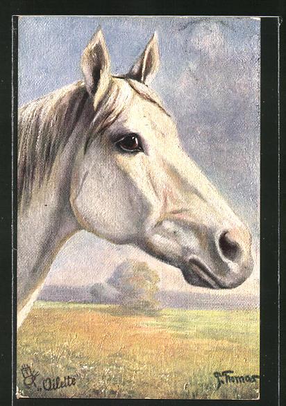 Künstler-AK Kopfstudie eines Araber-Pferdes