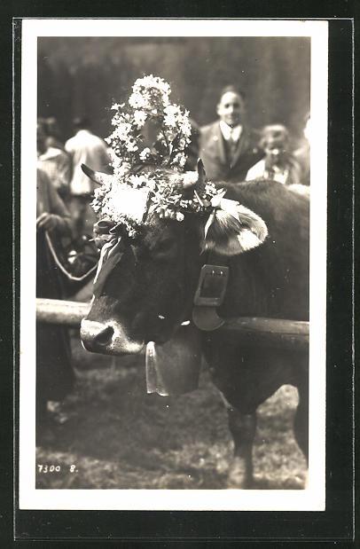 Foto-AK Kuh mit Blumenschmuck und Glocke