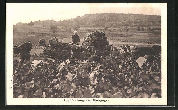 AK Les Vendanges en Bourgogne, Feldarbeiter bei der Weinernte