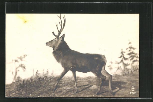 AK Hirsch auf einer Lichtung 0
