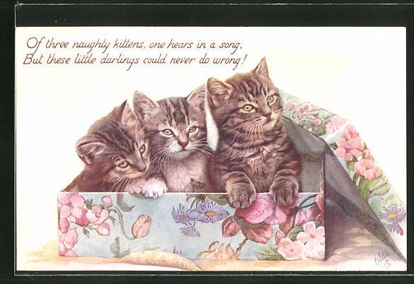 AK drei Katzen in einem bunten Karton 0