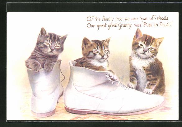 AK drei Katzen in weissen Boots 0