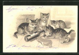 AK vier Katzen spielen mit einer Flasche