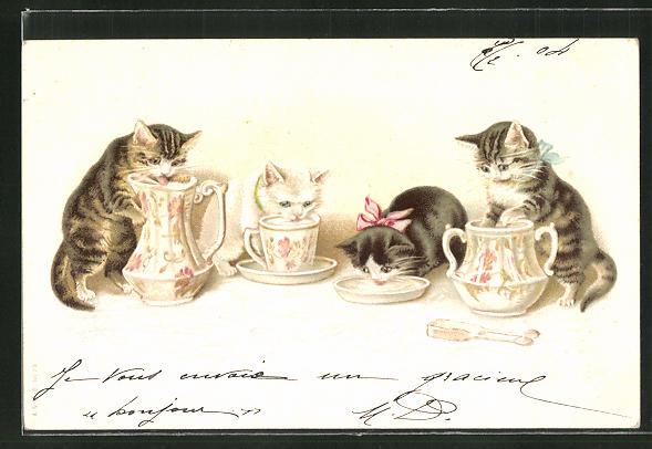 AK vier Katzen trinken aus Krügen & Tasse 0