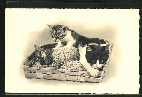 AK drei Katzen in einem Korb mit Wollknaul 0