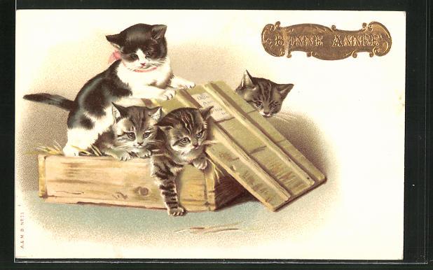 AK vier Katzen in einer Holzkiste 0