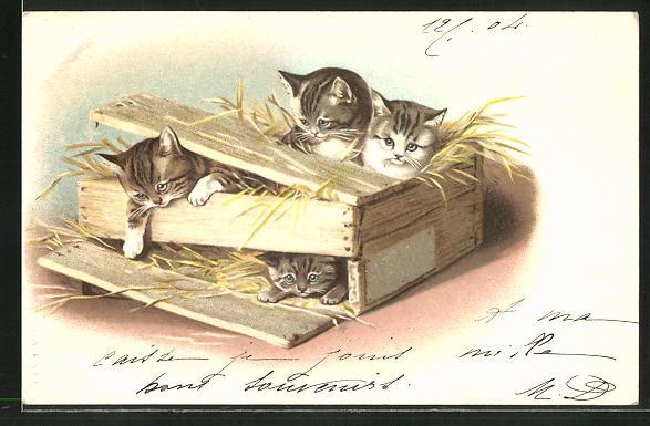 AK vier Katzen in einer Holzkiste