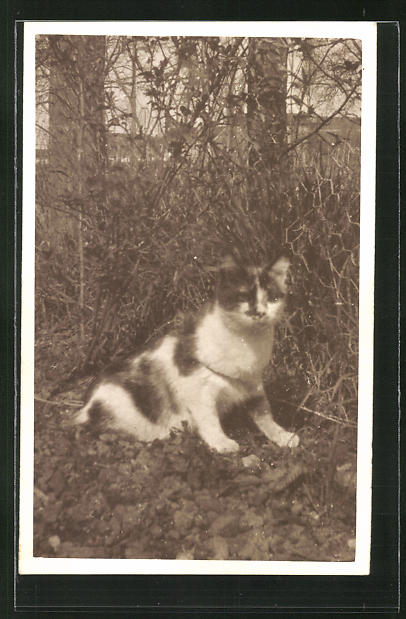 Foto-AK Gescheckte Katze an einem Gartenzaun 0