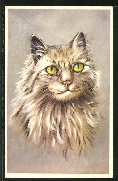 AK Langhaar-Katze mit hellem Fell 0
