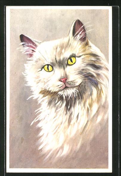 AK Langhaar-Katze mit weissem Fell