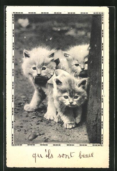 AK Niedliche ängstliche Katzenjunge 0
