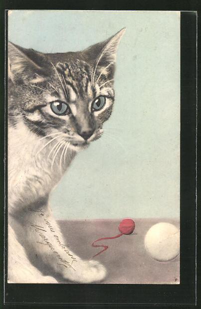 AK Katze mit Ball und Wollknäuel 0