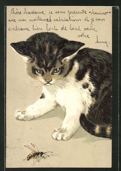 Präge-AK Katze blickt auf eine Wespe 0