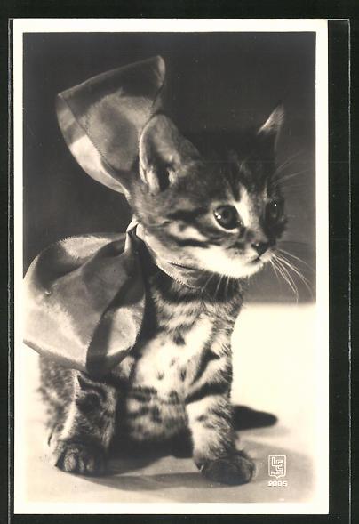 AK Kleine Katze mit grosser Schleife um den Hals