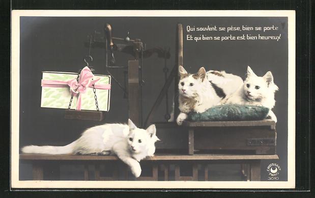 AK Qui souvent se pèse, bien se porte, Et qui bien se porte est bien heureux, Katzen liegen auf einer Waage