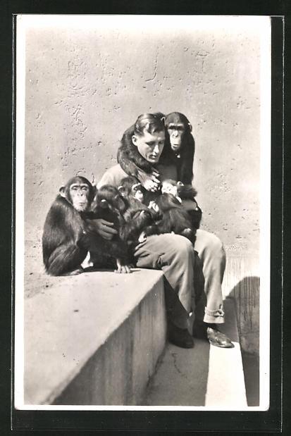 AK München, Tierpark Hellabrunn, Schimpansenkinder in der Menschenaffen-Station