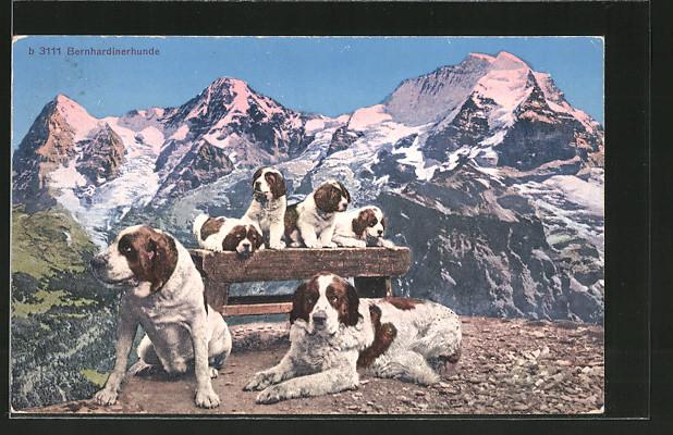 AK Bernhardinerhunde mit Welpen