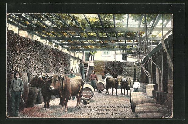 AK Madeira, Cossart Gordon & Co., Ochsengespanne, Winzer