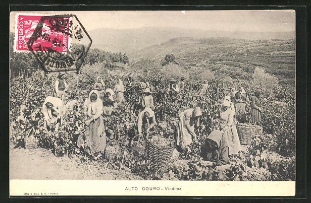 AK Alto Douro, Vindima, Feldarbeiterinnen bei der Weinernte