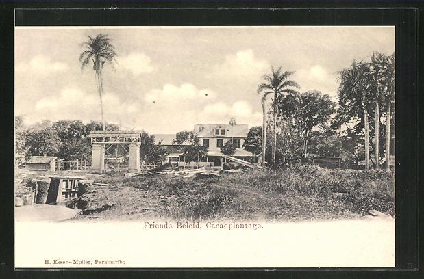 AK Friends Beleid / Surinam, Cacaoplantage, Kakao-Plantage