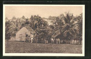 AK Bluefields, Ortspartie mit Palmengarten