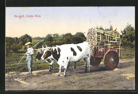 AK Costa Rica, Strassenpartie mit Ochsenkarren