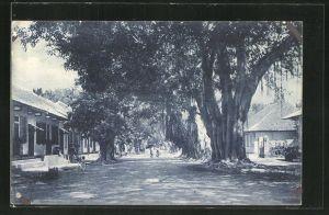 AK Timor Portugues, Uma Rua de Dili