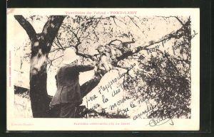 AK Fort-Lamy, Panthère apprivoisée sur un arbre