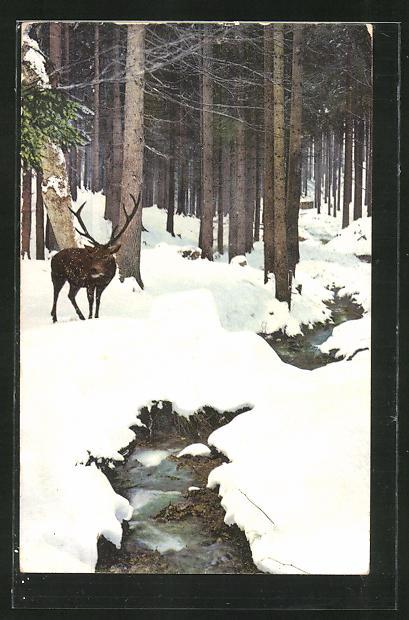 Künstler-AK Photochromie Nr.2389: Hirsch stapft durch den Schnee im Wald