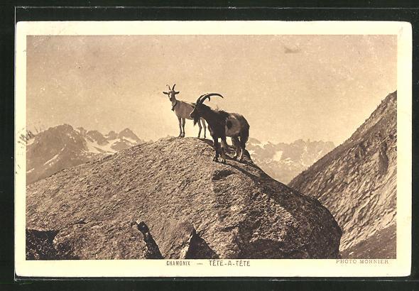 AK Chamonix, Ziegen im Gebirge