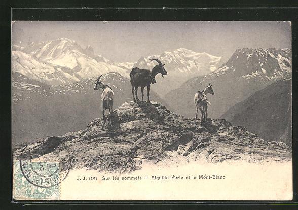 AK Mont Blanc, Ziegen vor Bergpanorama