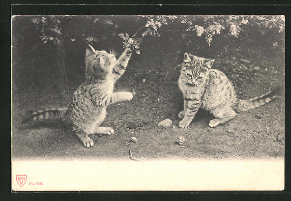 AK Katzen spielen unter einem Busch