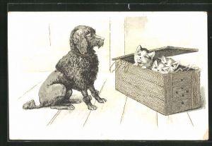 AK Pudel vor einer Holzkiste mit Katzen