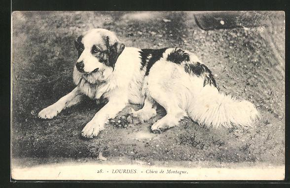 AK Lourdes, Chien de Montagne, Pyrenäenberghund